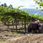 Nanoparticles as an alternative to the use of pseudo-allergenic additives in winemaking and fungicide traditional treatments in the Rias Baixas D.O.'s vineyards